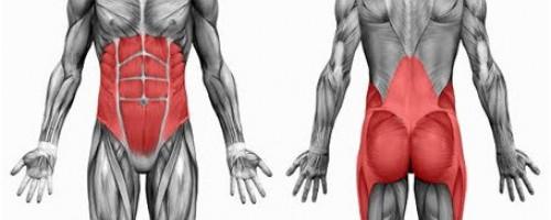 core-anatomie